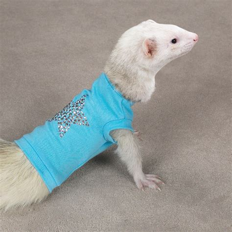ferret sweaters clothes wearing animals