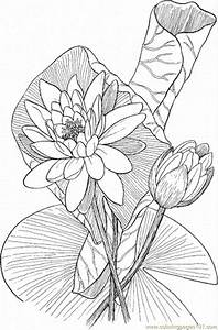 Free coloring pages of tiger lily