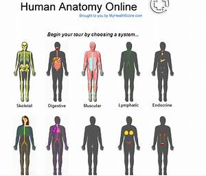 The Most Wonderful Creature  Human Body For Kids