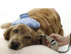 vet news small animal news vet school success