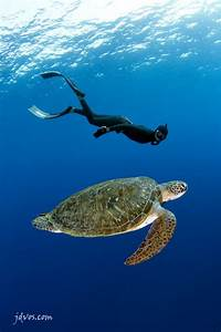 200 best images about Hawaiʻi Underwater on Pinterest ...