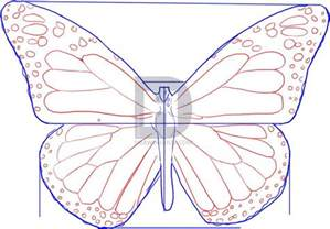 Steps How to Draw a Monarch Butterfly