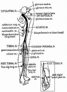 Sound Chiropractic Center  Seattle Chiropractor For Leg Pain