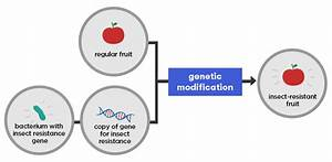 What Is Genetic Modification