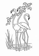 Printable Coloring Flamingo Pdf Graphics Flamingos sketch template