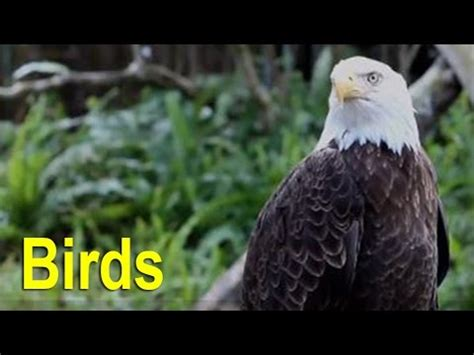 endangered species threatened species birds