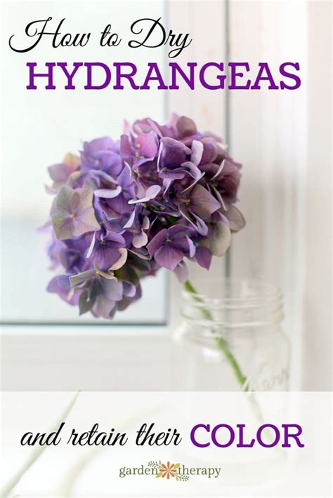 The Simple Way To Dry Hydrangea Flowers And Retain Their Color. How To Make A Living Room Zen. Living Room Furniture Sales Online. Living Room And Kitchen Designs. How To Decorate A Living Room Kitchen Combo. Living Room Architecture Pinterest. Jhene Aiko Living Room Flow Free Mp3 Download. Design For Living Room With Open Kitchen. Elegant Living Room Furniture Uk