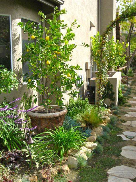 citrus trees planted in containers within the small garden bed makers blog by