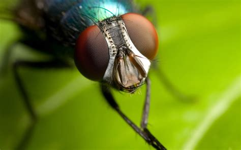 house fly hd animal wallpapers cool animals widescreen