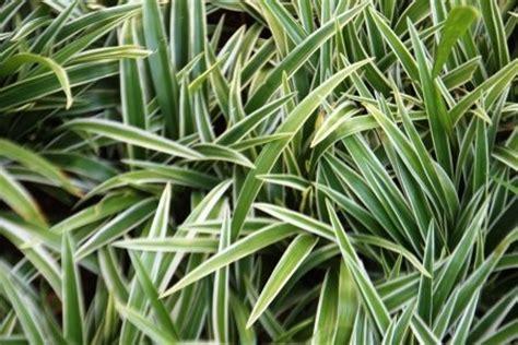 jenis tanaman hias tahan panas matahari