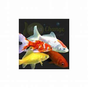 Vente De Plantes En Ligne Pas Cher : achat de poisson d aquarium en ligne 28 images d 233 ~ Premium-room.com Idées de Décoration