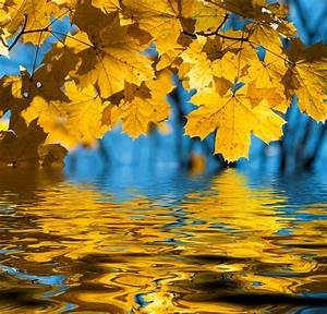 Best, 44, Autumn, Leaves, On, Water, Wallpaper, Backgrounds, On, Hipwallpaper