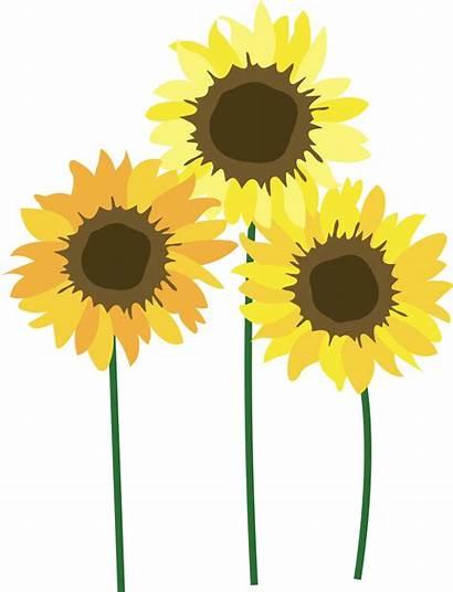 Sunflower Sunflowers Festival Annual Logos 3rd Field