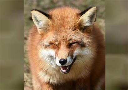 Fur Animals Release Defense Bill Ban Wild