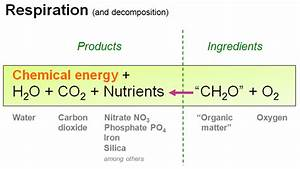 Respiration And Decomposition