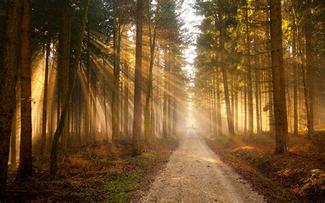 light on the path nature trees forest path sunlight wallpaper 1920x1200