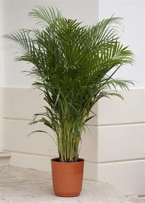 plante dans chambre à coucher plante dépolluante 10 plantes qui améliorent l 39 intérieur
