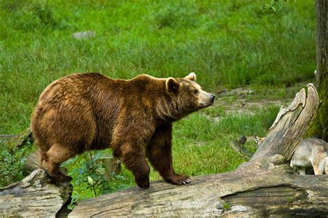 Best Photos Of Eric Carle Brown Bear Printables Eric