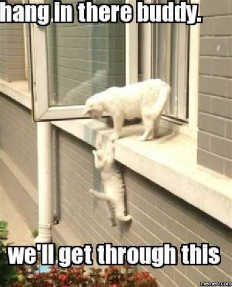 Hang In There Cat Meme - image gallery hang in there meme