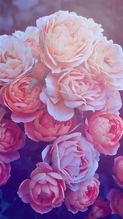 Rose Wallpapers Gold Die