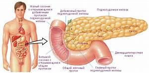Поджелудочная железа симптомы и лечение и сахарный диабет
