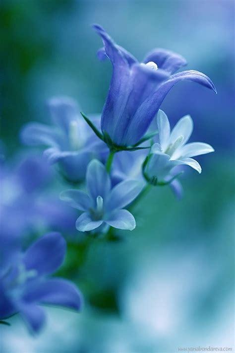 light blue flowers light blue flowers
