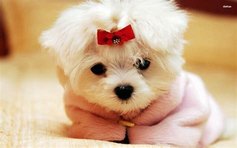 Cute Dogs And Puppies Wallpaper ·①
