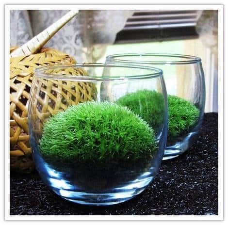 where can i buy moss for a terrarium buy it yourself wedding moss table terrariums by warm country meadows the inspired bride