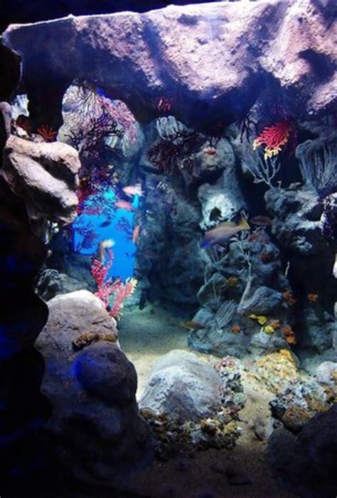 la grotte de m 233 diterran 233 e picture of aquarium mare nostrum montpellier tripadvisor