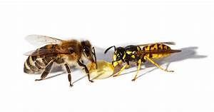 Bees and Wasps - Different Pests with the Same Sting ...