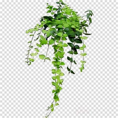 Hanging Pot Plants Tree Background Clipart Transparent