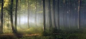 Morning, Forest, Shrubs, Sunrise, Trees, Path, Mist, Leaves, Green, Nature, Landscape, Wallpapers