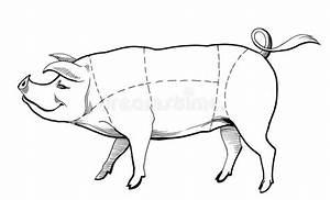 Butcher Chart Stock Illustration  Illustration Of Pork