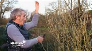 fin de l hiver tailler vos hibiscus silence 231 a pousse