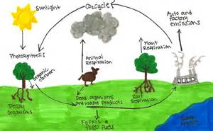 Carbon Cycle Examples