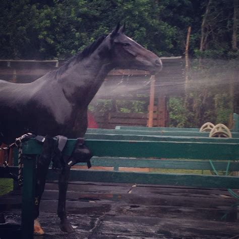 rain horses animals