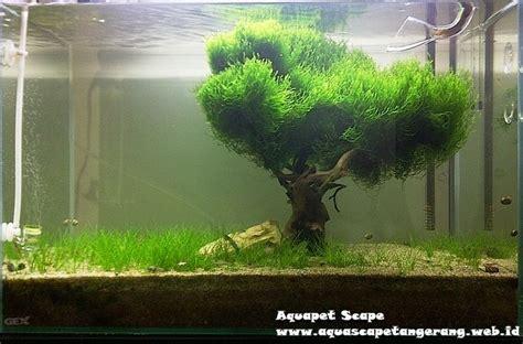 Aquascape Moss by Moss And Hairgrass Aquascape Aquascaping