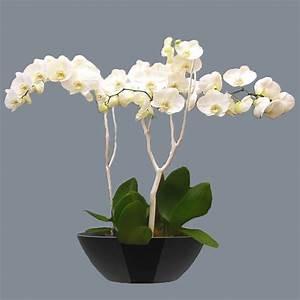 Cache Pot Orchidée : orchid e vasque ovale basse orchidee facile by natural element ~ Teatrodelosmanantiales.com Idées de Décoration