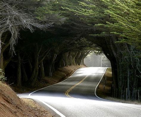 The World Geography 10 Famous Tree Tunnels