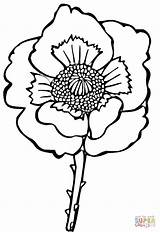 Poppy Flower Coloring Drawing Sheets Poppies Pages Clipart Line Easy Printable Supercoloring Print Cliparts sketch template