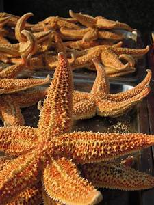 A Field Guide To Chinese Street Food  Starfish