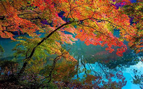autumn hd wallpaper  branches   tree hanging