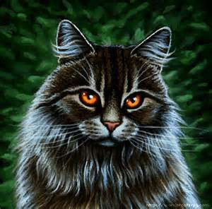 cat warriors my warrior cats pictures longhaired brown tabby cat