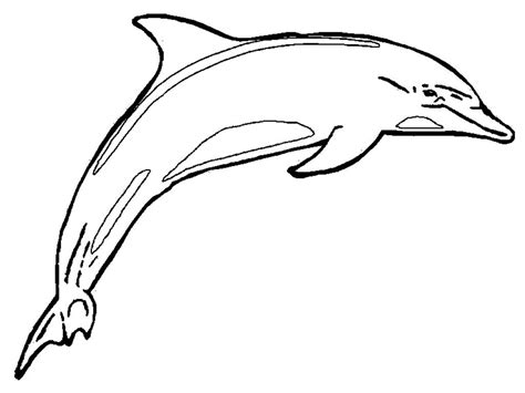 dolphin printables dolphin coloring pages print outs