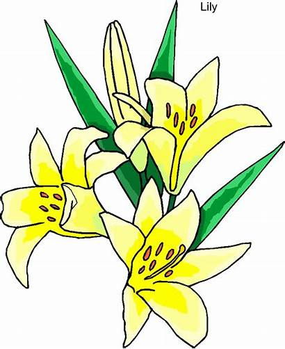 Lily Stargazer Clipart Flower Clipartmag Cliparts