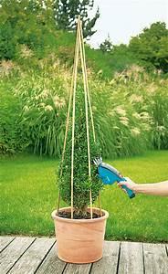 Bux Schneiden Wann : buchs schneiden buchsbaum schneiden f r faule g rtner ~ Lizthompson.info Haus und Dekorationen