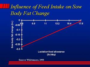 Influence of Feed Intake on Sow Body Fat Change