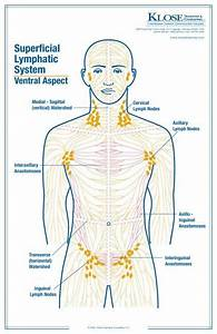 Lymphatic Massage Techniques For Health And Beauty