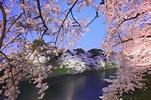千鳥淵的景點資訊|絕景日本