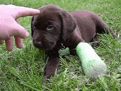 Cast Dog Sorry Puppy Casts Puppies Cost